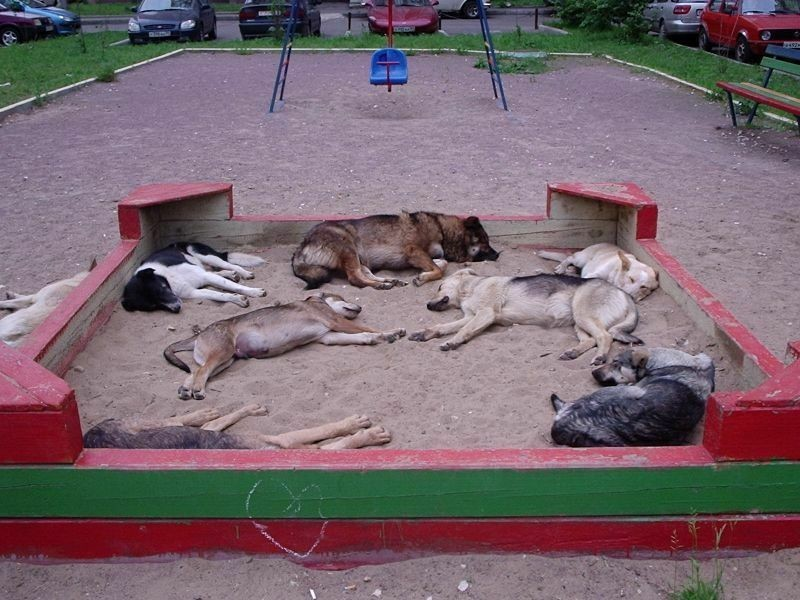 Собаки лежат в детской песочнице.