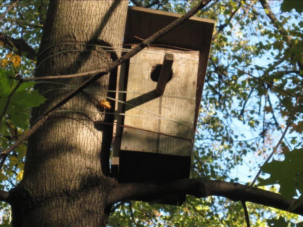 Крепление скворечника к дереву с помощью проволоки или веревки.