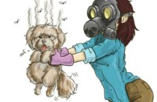 Как избавиться от запаха собаки.