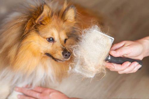 Вычесывание шерсти у собаки.