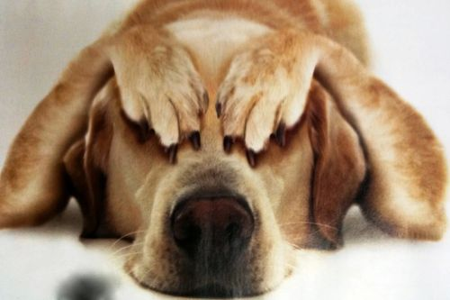 Собака и стресс