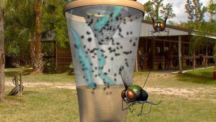 Как сделать ловушку для мух.