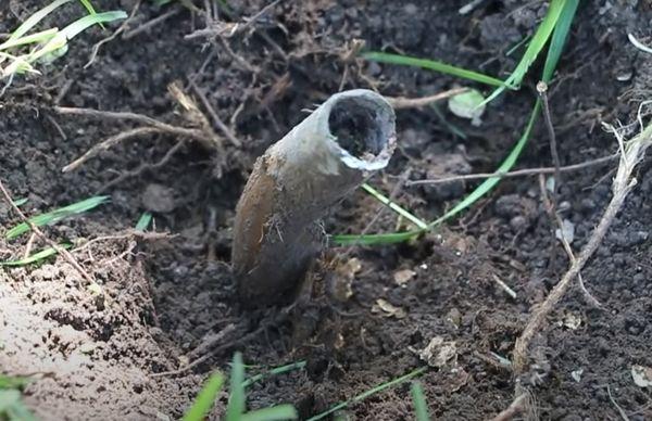 Труба в земле.